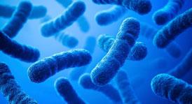Уничтожение бактерий - дезинфекция